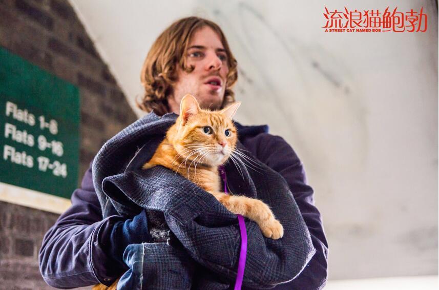 《流浪猫鲍勃》剧照.jpg