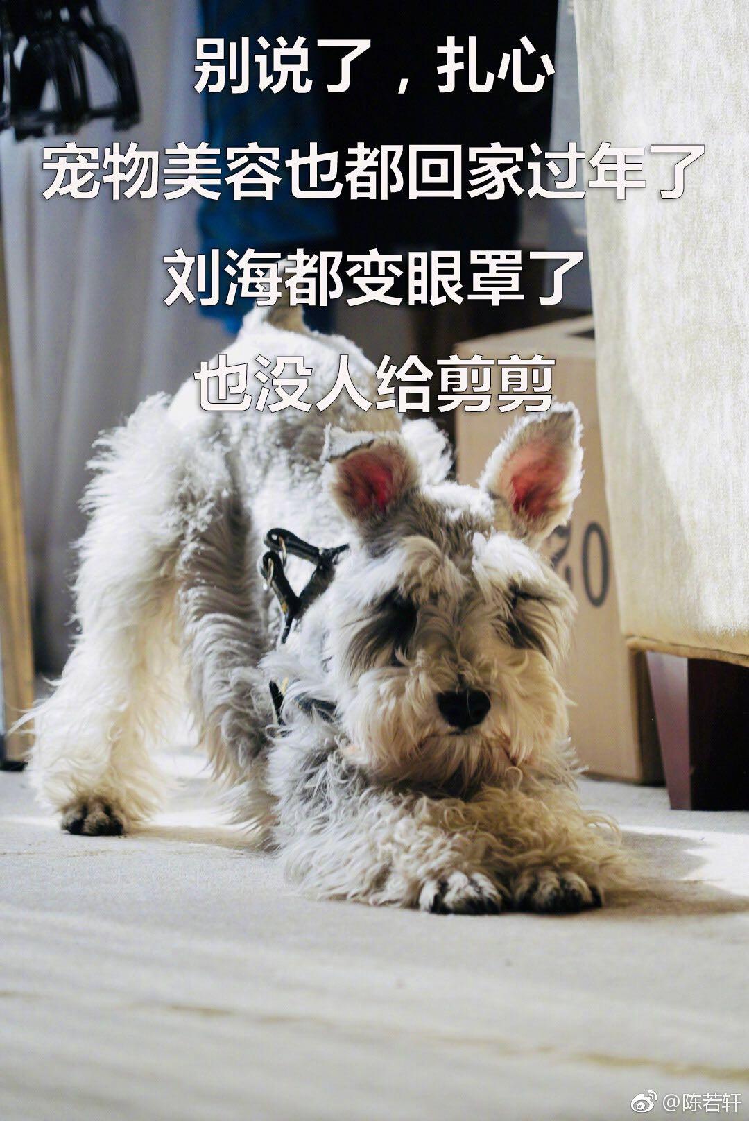 陈若轩自制狗表情包.jpeg